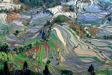 yunnan_rice-07.jpg