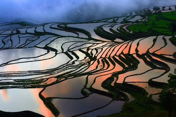 yunnan_rice_fields-7.jpg