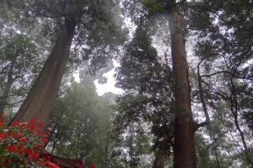 Деревья-божества