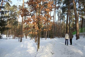 Зимой дубы спят а сосны - практикуют