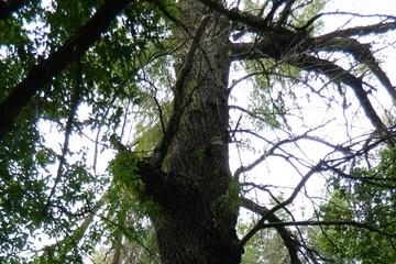 Дерево и энергия тумана. С хорошего фотоаппарата