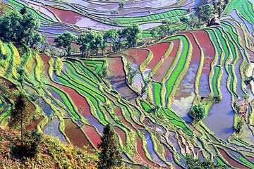 yunnan_rice_fields-4.jpg