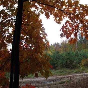Осень. Лес. Дороги.
