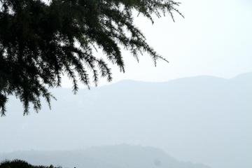 Лес, Пагода