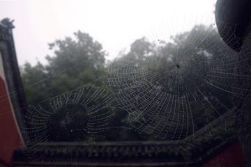 twoweb.jpg
