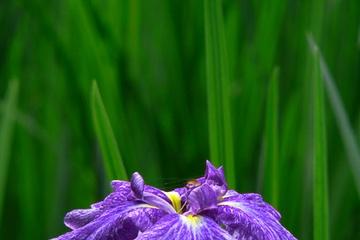 flora14.jpg