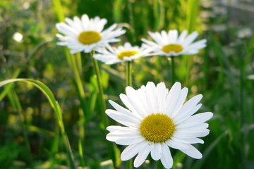 flora15.jpg