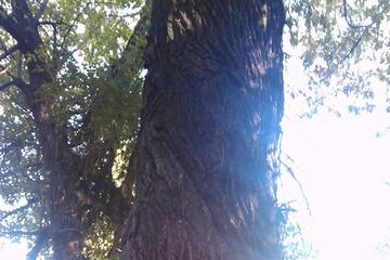 Дерево, Свет и Энергия