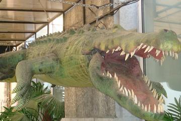 Крокодилы в городе