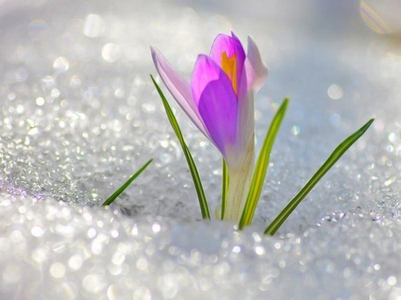 7-10 марта. Выездной семинар ЧЮЦ с Ольгой Струковой. Настраиваемся на весну!