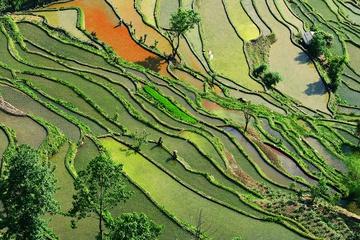 yunnan_rice_fields-8.jpg