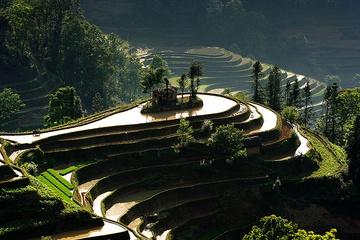 yunnan_rice-09.jpg