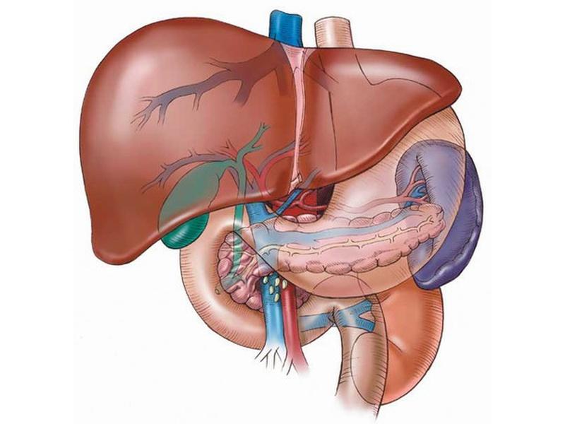 Групповая терапия. Лечение болезней печени и желчного пузыря.