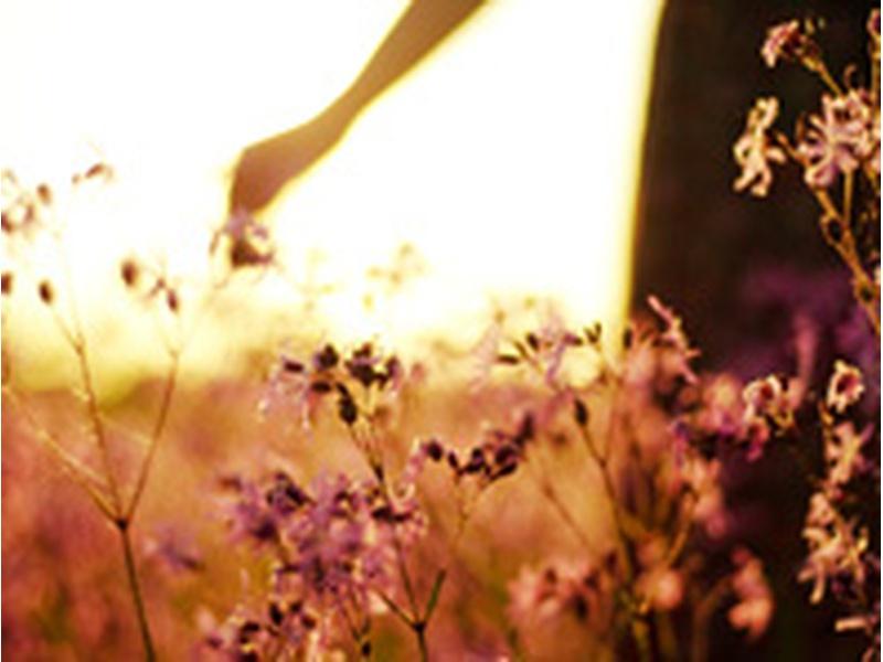Семинар «Очищение кармы. Исцеление сердца».  21-22  и 28-29 января 2012 года. Семинары проводит Любовь Прапорщикова.