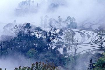 yunnan_rice_fields-9.jpg
