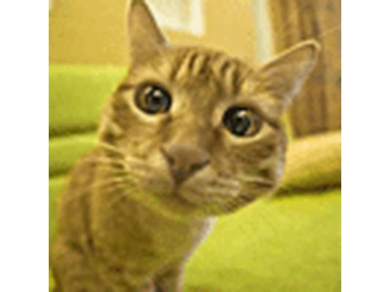 Квантовый кот и медицинская диагностика