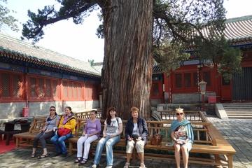 Медитация у Большого Дерева