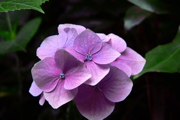 flora17.jpg