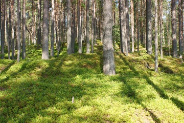 Пегремы - одно из загадочных мест русского севера