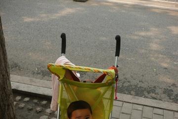 Пекинский пупсик