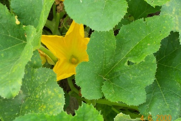 flower2.jpg