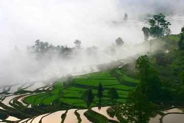 yunnan_rice-01.jpg