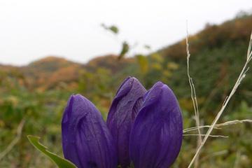 flora03.jpg