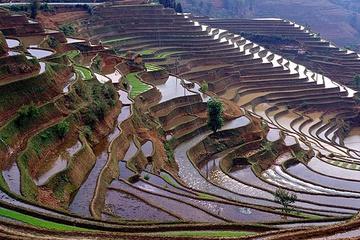 yunnan_rice-06.jpg