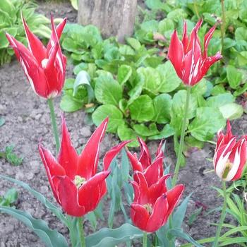Still flowers